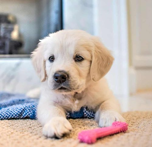 pet urine cleaning services